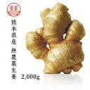 無農薬生姜2,000g 熊本県産 国産生姜 しょうが ショウガ 根生姜