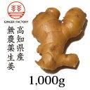 無農薬生姜1,000g 高知県産|国産生姜|しょうが ショウガ|根生姜