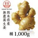 【種生姜】熊本県産無農薬生姜1,000g 6月末まで販売|国産生姜|しょうが ショウガ|生姜栽培 しょうが栽培|家庭菜園