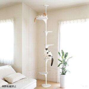 【2000円OFFクーポン配布中】 OPPO(オッポ) Cat Fores
