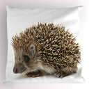 Ambesonne Hedgehog Pillow Sham, Small Cute Mammal with Spi