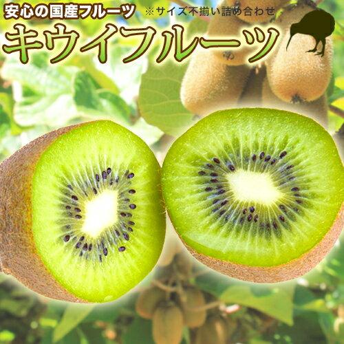 キウイフルーツ 【国産 サイズ不揃い 3kg】訳あり