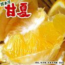 あまなつ 5kg (甘夏) 送料無料、わかやま産あまなつ、有田みかんの里で知られる和歌山県産あまなつ。初夏のフルーツ甘夏を産地直送、あまなつ送料込みで訳あり特価。新鮮あまなつ、スイーツ甘夏。さわやかな甘味の甘夏、フレッシュ柑橘の甘夏【smtb-k】【ky】