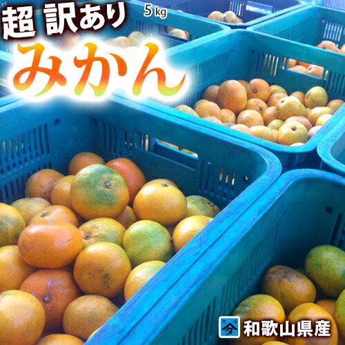 みかん 5kg 和歌山県産【超訳あり】キズ物多数