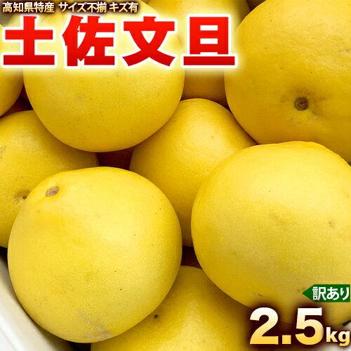 土佐文旦 2.5kg (Lから2L)