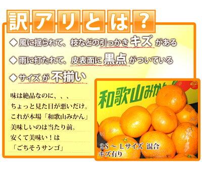 みかん和歌山県産【訳あり】ご自宅用【送料無料】柑橘蜜柑ミカン産地直送