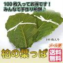 柏の葉っぱ 100枚入り 【柏葉 かしわ 柏餅 5月 子供の...