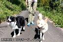 犬用リード 本革 レザー 多頭引き 2頭引き『10年リード』