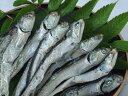 いりこ・ちりめんの産地として有名な伊吹島産です!煮干しいりこ(大羽)を問屋ならではの特別価格でご提供致します。ぜひ一度、瀬戸内の海の幸をご賞味下さい!【瀬戸内の新鮮な海の幸!!!】いりこで有名な伊吹島産!煮干しいりこ(大羽)500g