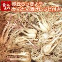 鳥取県産 砂丘らっきょう 5kg 生らっきょう 砂付き 根付...