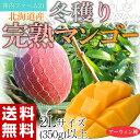 《送料無料》神内ファーム21『冬穫り完熟マンゴー』 北海道産 2L(350g)以上【同梱不可】☆