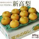 送料無料 梨 栃木県産JAなすの 新高梨 約5kg (5〜14玉)