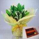 【花言葉:幸福の再来】母の日に北海道産の可愛い花「すずらん鉢植え」と彩路季の生キャラメルをラッピングしてお届けいたします!