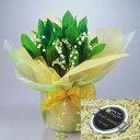 【花言葉:幸福の再来】母の日に北海道産の可愛い花「すずらん鉢植え」とジャンダルムの生キャラメルをラッピングしてお届けいたします!