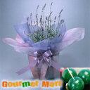 ラベンダー5号鉢植え(鉢花)&まりも羊羹をラッピングしてお届けいたします!