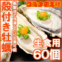 【送料無料 生牡蠣 殻付き 生食用カキ】生牡蠣 60個入り