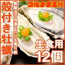 【送料無料 生牡蠣 殻付き 生食用カキ】生牡蠣 12個入り 冷凍殻付き牡蠣 生食用 新製法で冷凍なの