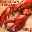 カナダ産ボイルオマールロブスター 300g / 解凍してそのまま食べられる冷凍ボイル済みロブスター