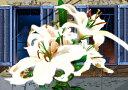 鈴木英人「中庭の白」- LIFE IS A BLOSSOM- 2012年 EMグラフ 額付版画作品国内 送料無料