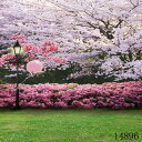 撮影用背景デジタル写真背景 桜 春の風景 和風 スタジオ大型全身撮影用 バックシート 14896