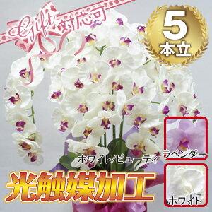 高級胡蝶蘭5本立 (光触媒)シルクフラワー・造花 胡蝶蘭 開店祝い 母の日 ギフト プレゼント
