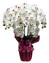 胡蝶蘭 ロイヤルオーキッド(光触媒)シルクフラワー・造花 胡蝶蘭 開店祝い 母の日 ギフト プレゼント