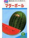 スイカ種 マダーボール みかど協和の楕円形小玉スイカです。 種のことならお任せグリーンデポ
