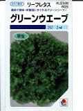 レタス タキイ・・・グリーンウェーブ・・・<タキイのリーフレタスです。 種のことならお任せグリーンデポ>
