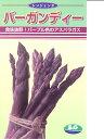 アスパラガス シンジェンタ・・・バーガンディー・・・<シンジェンタの紫アスパラです。 種のことならお任せグリーンデポ>