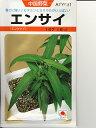 中国野菜種 タキイ  エンサイ  別名、空芯菜の名前をもつタキイの中国野菜種です。 種のことならお任せグリーンデポ