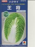 纳帕白菜种子品种Takii胜区交叉耐寒[白菜の種 タキイ交配・・・王将・・・<タキイの白菜です。種のことならお任せグリーンデポ>]