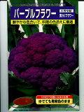 紫色花圃种子繁育三好武藏野[武蔵野種苗園 三芳交配・・・パープルフラワー・・・<武蔵野の紫カリフラワーです。種のことならグリーンデポ>]