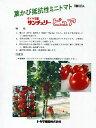ショッピングトマト ミニトマト種 サンチェリーピュワ <トキタ種苗のミニトマト種です。種の通販ならグリーンデポ>