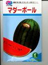 小玉スイカ種 みかど交配 マダーボール   みかど協和の小玉スイカの種です。