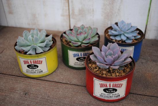 多肉植物寄せ植えペイント缶(MS)【LJ-単品】当店オリジナル