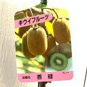 キウイ 苗木 香緑 (緑実メス) 12cmポット苗 こうりょく キウイ 苗 キウイフルーツ gv