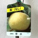梨 苗木 幸水 12cmポット苗 こうすい なし 苗 ナシ gv