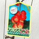 リンゴ 苗木 アルプス乙女 12cmポット苗 りんご 苗 林檎 gv
