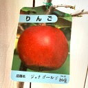 リンゴ 苗木 ジョナゴールド 12cmポット苗 (ワイ性) りんご 苗 林檎 gv
