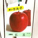 リンゴ 苗木 紅玉 12cmポット苗 こうぎょく りんご 苗 林檎 gv