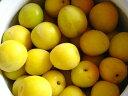 【1年間枯れ保証】【春・夏に収穫する果樹】ウメ/南高梅 15...