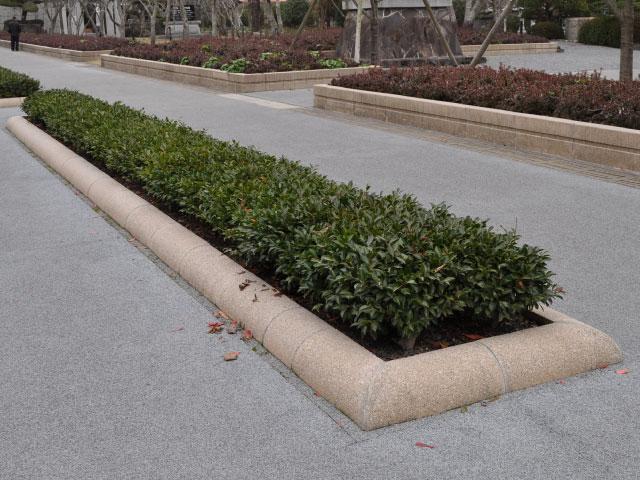 【1年間枯れ保証】【低木】カンツバキ 15cmポット 15本セット 送料無料 【あす楽対応】 剛健な低木