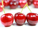 【1年間枯れ保証】【春・夏に収穫する果樹】サクランボ/アメリカンチェリー 15cmポット  【あす楽対応】