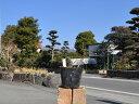 【1年間枯れ保証】【山野草】ダンギク青花 〜cmポット 6本...