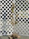 【1年間枯れ保証】【街路樹&公園樹】ナツツバキ単木 1.2m...