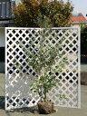 フェイジョア 2.0m露地 2本セット【1年間枯れ保証】【シンボルツリー常緑】
