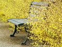 【1年間枯れ保証】【春に花が咲く木】ヒュウガミズキ 15cmポット 【あす楽対応】