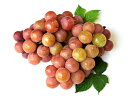 【1年間枯れ保証】【秋に収穫する果樹】ブドウ/安芸クイーン 15cmポット  3本セット 送料無料