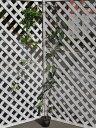 【1年間枯れ保証】【つる性】ムベ 2.0m長尺 【あす楽対応...