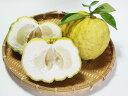 【1年間枯れ保証】【冬に収穫する果樹】ユズ/獅子柚子 15cmポット